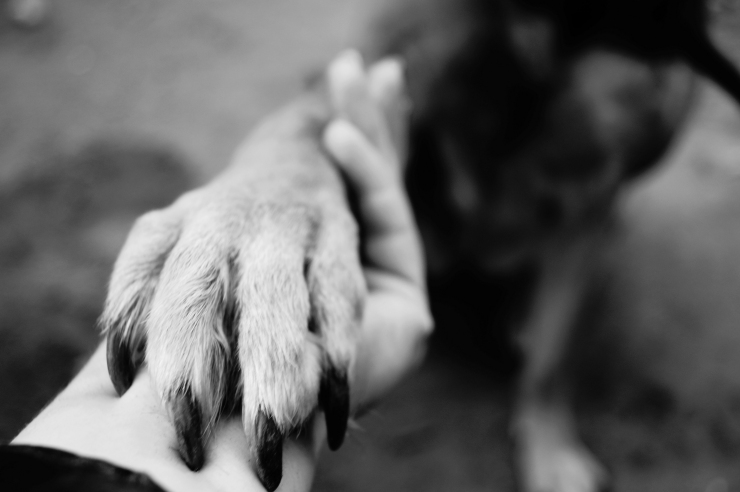 Dog Paw Takes The Woman Hand. People Support Pets. Dog Sits And