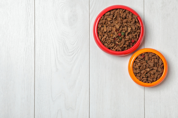 Bowls With Food For Cat And Dog On Wooden Background. Pet Care