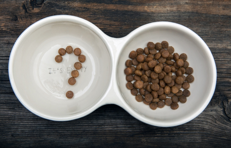 bigstock-Dog-Food-Question-Symbol-Woode-263101627.jpg