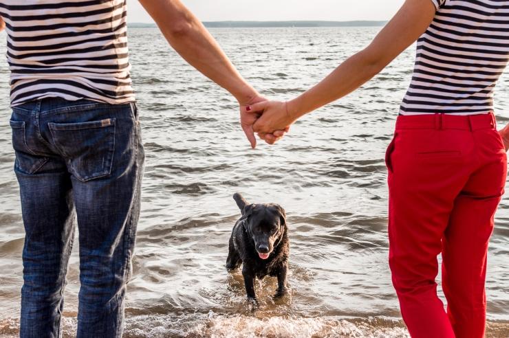 Dog Runs Out Of The Water. Man And Woman Holding Hands. Concept