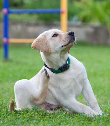 scratchdog